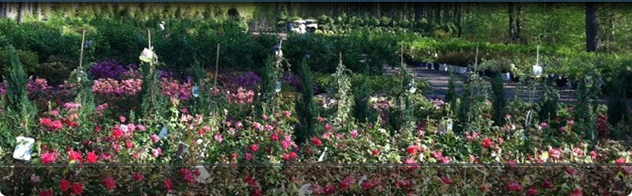 Locally grown Trees and Shrubs at Hopkinton Stone & Garden. Hopkinton, MA